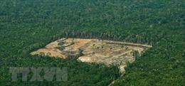 'Lá phổi xanh' Amazon bị tàn phá ở mức báo động