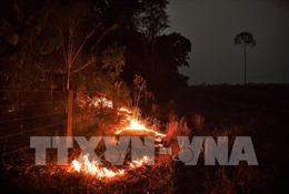 Brazil điều máy bay vận tải quân sự tham gia dập cháy rừng Amazon