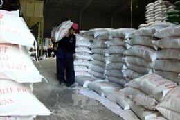 Giá gạo Việt Nam giảm vì lo ngại Philippines hạn chế nhập khẩu
