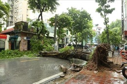 Hà Nội: Nhiều tuyến phố ngập sâu, hàng loạt cây đổ do ảnh hưởng bão số 3