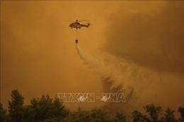 Hỏa hoạn thiêu rụi khu rừng bảo tồn thiên nhiên hoang dã trên đảo Evia của Hy Lạp
