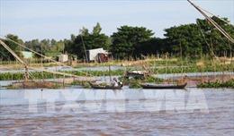 Nước đầu nguồn sông Cửu Long đang lên