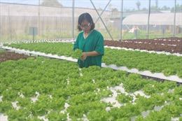Hiệu quả từ chính sách hỗ trợ sản xuất rau an toàn tập trung tại Thanh Hóa