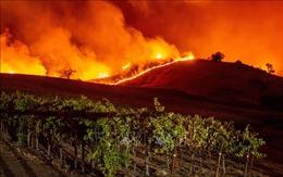 California ban bố tình trạng khẩn cấp vì cháy rừng lan rộng