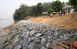 Được kè khẩn cấp, bờ sông Thao vẫn tiếp tục sạt lở hơn 1m kéo dài