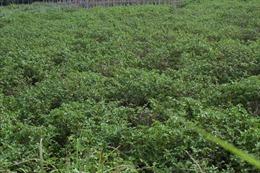 Nhân rộng các mô hình an toàn thực phẩm ở vùng cao Bá Thước, Thanh Hóa
