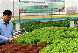 Hàng Việt và bài toán mở rộng thị trường