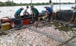 Cá chết nổi trắng hồ Cửa Nam, Nghệ An