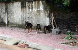Xử lý nghiêm các trường hợp nuôi chó thả rông không đúng quy định