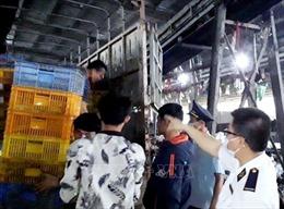 Tuồn 15.000 con gà giống không rõ nguồn gốc qua cửa khẩu Móng Cái