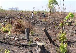 Liên tiếp xảy ra các vụ phá rừng phòng hộ ở Quảng Nam