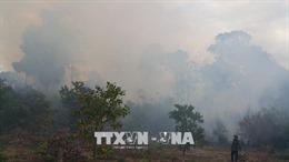 Gia Lai có 22 ban quản lý rừng phòng hộ, rừng vẫn mất tràn lan