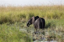 Phát hiện vụ thảm sát voi lớn nhất trong lịch sử