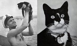 Chú mèo huyền thoại thoát chết trên 3 chiến hạm bị đánh đắm