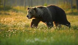 'Tan chảy' với cảnh gấu ôm người chăm sóc ngủ ngon lành