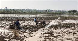 Người dân Thái Bình xuống đồng ngày Xuân