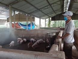 Phó Thủ tướng phê bình Bộ Nông nghiệp và Phát triển nông thôn vì để giá thịt lợn tăng cao
