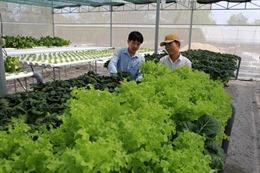 Hỗ trợ phát triển sản phẩm công nghiệp nông thôn tiêu biểu