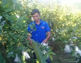 Chàng thanh niên dân tộc Thái đưa cây ổi đặc sản lên rừng