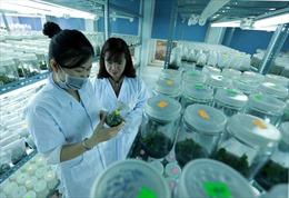 Xây dựng Đắk Lắk trở thành trung tâm kinh tế mạnh vùng Tây Nguyên
