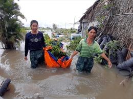 Bão số 9: Nhiều diện tích hoa màu trên địa bàn TP Hồ Chí Minh bị nước nhấn chìm