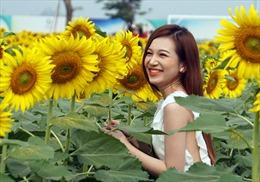 Đẹp ngỡ ngàng cánh đồng hoa hướng dương ở TP Hồ Chí Minh