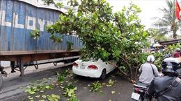 Cành cây gẫy đè trúng ô tô, hai mẹ con thoát chết trong gang tấc