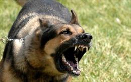 Kinh hoàng 2 con chó béc-giê lao vào cắn xé bé trai 12 tuổi