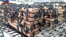 Nuôi ruồi lính đen kết hợp với chăn nuôi đạt giá trị kinh tế cao