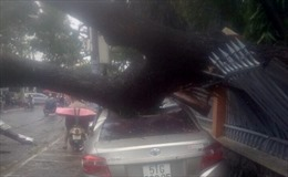 Cây xanh bật gốc đổ đè bẹp ô tô
