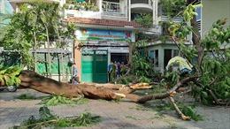 Cây xanh bật gốc đè nhiều học sinh ở TP Hồ Chí Minh