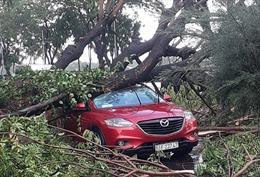 TP Hồ Chí Minh: Mưa lớn khiến cây đổ đè người đi đường, cháy khách sạn