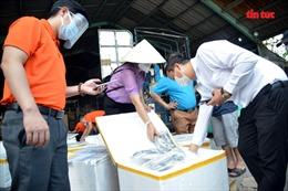 TP Hồ Chí Minh tiếp nhận 3 tấn cá đầu tiên do bà con Quảng Bình gửi tặng
