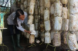 TP Hồ Chí Minh đào tạo 32 nghề cho lao động nông thôn