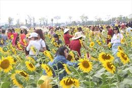 Nhiều người đến 'check-in', cánh đồng hoa hướng dương 'thất thủ' dịp nghỉ Tết Dương lịch