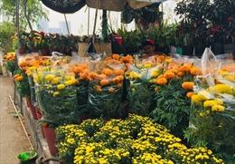 Nhộn nhịp cây cảnh, hoa Tết tại bến Bình Đông