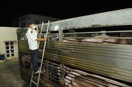 Dịch tả lợn châu Phi đến miền Trung, TP Hồ Chí Minh 'căng mình' chốt trực tại các cửa ngõ