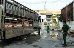 TP Hồ Chí Minh chốt chặn cửa ngõ giáp ranh với các tỉnh có dịch tả lợn châu Phi