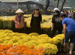 Thành phố Hồ Chí Minh 'ngập' sắc màu khi các chợ hoa bắt đầu mở bán