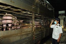 TP Hồ Chí Minh đẩy mạnh tái đàn lợn, tăng nguồn cung thị trường cuối năm