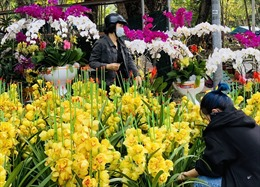 TP Hồ Chí Minh: Hoa chậu ế ẩm nhưng hoa cắt cành không còn để bán