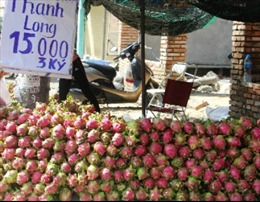 Thanh long giá rẻ 'đổ bộ' vào TP Hồ Chí Minh nhưng sức mua yếu