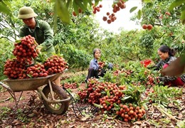 Cơ hội bán nông sản qua thương mại điện tử