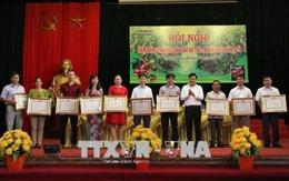 Bội thu vụ vải thiều Lục Ngạn - Bắc Giang