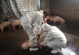 Giải trình tự gen vi rút gây bệnh dịch tả lợn châu Phi tại Việt Nam
