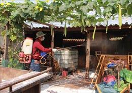 Đắk Lắk công bố dịch lở mồm long móng trên gia súc
