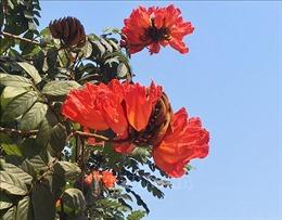 Xây dựng thành phố Huế với đặc trưng bốn mùa hoa