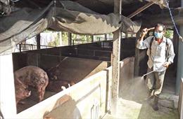 Long An đề nghị các địa phương phối hợp phòng chống dịch tả lợn châu Phi