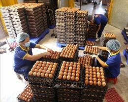 Công bố hạn ngạch thuế quan nhập khẩu muối, trứng gia cầm