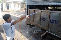 Sáu địa phương xuất hiện dịch lở mồm long móng tại Bà Rịa-Vũng Tàu
